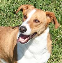 Lau, perro adoptado