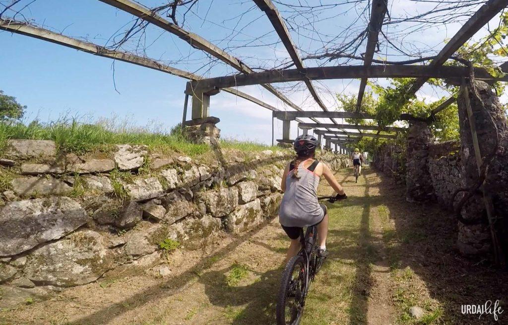 Ruta fácil en bici de Bermeo a Forua - Paso bajo parras de uvas