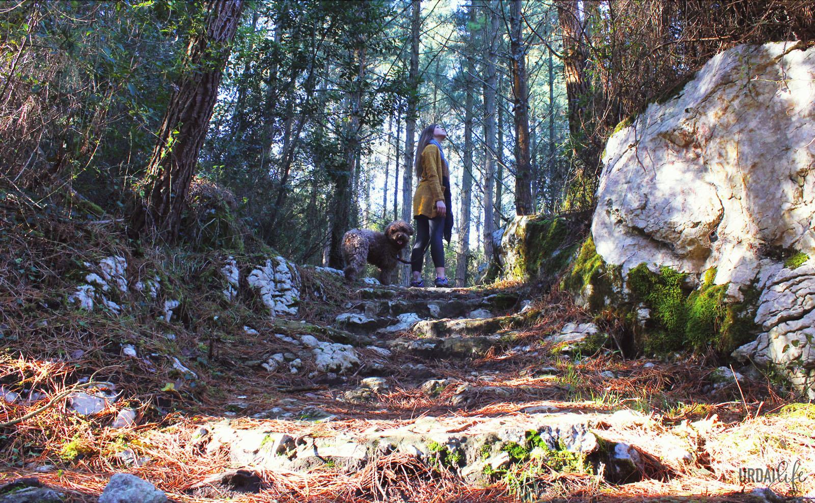 Bosque en la subida a San Pedro Atxarre desde Akorda