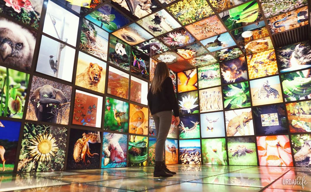 Sala con fotografías de flora y fauna en Ekoetxea Urdaibai.