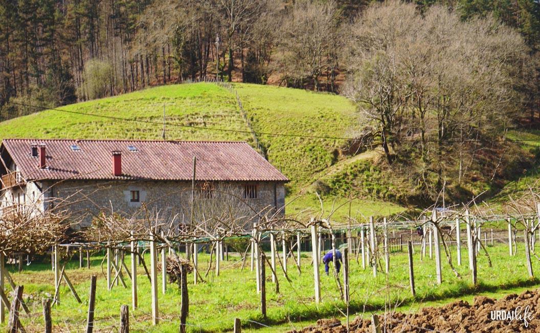 Cultivos de kiwis en la Reserva de la Biosfera de Urdaibai
